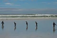 5 king penguins Royalty Free Stock Photo