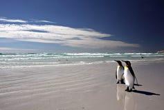 King Penguins at Volunteer Point stock photos