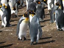 King Penguins Royalty Free Stock Image
