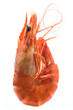 King prawn Stock Images