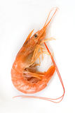 King Prawn isolated on white Royalty Free Stock Image