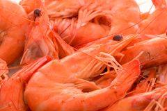 King prawns Stock Photos
