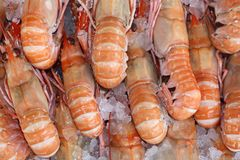 King prawns Stock Images
