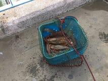 King prawns Royalty Free Stock Image