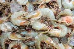 King prawns. Full frame image of king prawns for sale at fish market Royalty Free Stock Photography