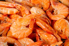 King  prawns Royalty Free Stock Photos