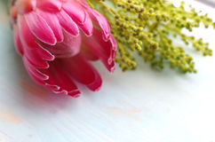 King Protea flower Stock Image