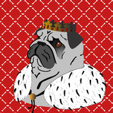 King pug Stock Photos