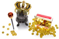 King rich money dog. French bulldog dog as king with crown  looking and staring  at you ,while sitting on the ground or floor, isolated on white background, with stock images