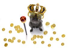King rich money dog. French bulldog dog as king with crown  looking and staring  at you ,while sitting on the ground or floor, isolated on white background, with royalty free stock image