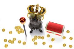 King rich money dog royalty free stock photography