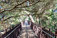 King's Park Elevated Walkway Royalty Free Stock Images