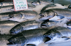 King salmon royalty free stock photography