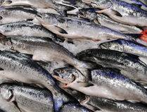 King Salmon. At market, on ice stock photography
