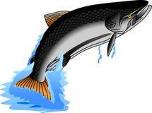 King Salmon Stock Image
