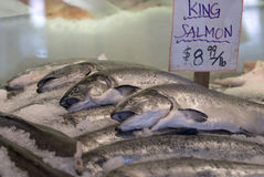 King Salmon on Ice Stock Images