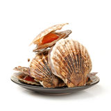 King scallop Royalty Free Stock Photo