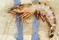 King shrimp Stock Photos