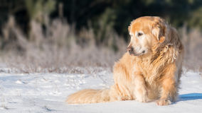 `The King` sitting on the snow Stock Photo