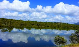 A king tide reflections views  in mangroves. Scenic Highway of the Central coast  reflections on a king tide in mangroves Royalty Free Stock Photo