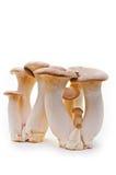 King trumpet. Fresh mushrooms. Royalty Free Stock Image