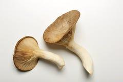 king trumpet mushroom, french horn mushroom Stock Photography
