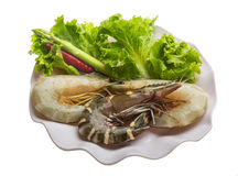 King and waterleg shrimps Stock Photo