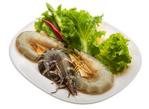 King and waterleg shrimps Stock Photos
