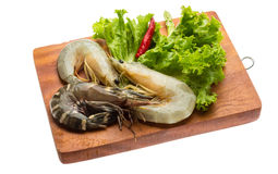 King and waterleg shrimps Stock Image