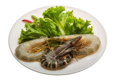 King and waterleg shrimps Royalty Free Stock Photo