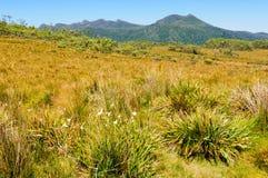 At the King William Saddle - Tasmania Stock Photos