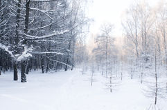 Kingdome of winter Stock Photos