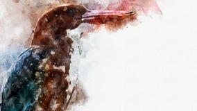 Kingfisher маленькой птицы Бело-throated смотря некоторое подает внутри стоковые фотографии rf