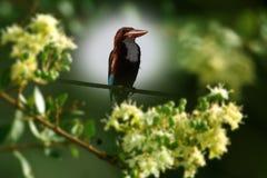 kingfisher imágenes de archivo libres de regalías