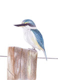 Kingfisher Stock Photography