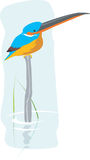 Kingfisher. Illustration of a kingfisher sitting in piled wood in water Royalty Free Stock Images