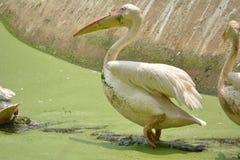 Kingfisher стоковая фотография rf