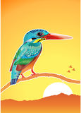 Kingfisher Bird Royalty Free Stock Images