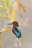 Kingfisher bird. On the nature environment Royalty Free Stock Photo