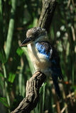 Kingfisher bird. Tree colour wild Stock Photos