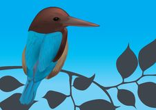 Kingfisher Bird Vector Illustration Royalty Free Stock Photos