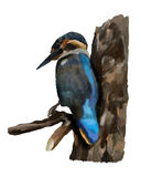 Kingfisher on a branch Royalty Free Stock Image