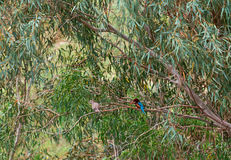 Kingfisher on a branch Royalty Free Stock Photo