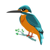 Kingfisher Flat Design Vector Illustration. Kingfisher vector. Predatory birds wildlife concept in flat style design. Tropical fauna illustration for prints Stock Photography