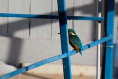 Kingfisher industry Royalty Free Stock Photo