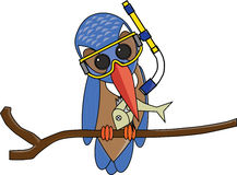 Kingfisher Cartoon Stock Photos