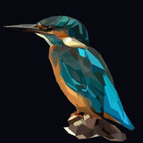 Kingfisher. Little blue bird kingfisher on dark background Stock Photo