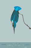 Kingfisher is looking for prey in the river. The image of a kingfisher looking for prey in the river, in a minimalist style Stock Image