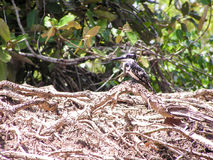 Kingfisher. In Nationalpark Africa Kenia Stock Photography