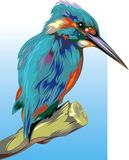 Kingfisher. Nice illustrated kingfisher on the blue and white background Stock Photo